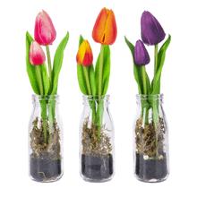 Tulips in Glass Bottle (6 pc. ppk.)