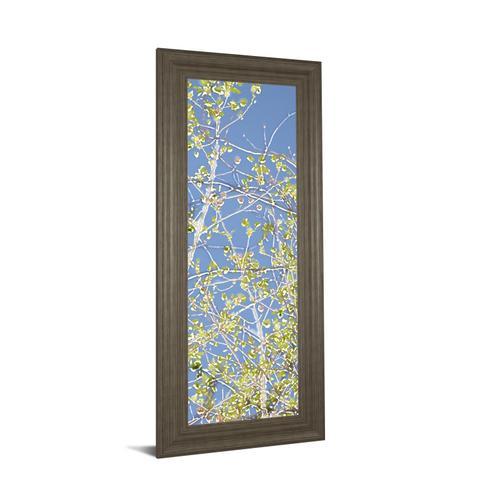 "Classy Art - ""Spring Poplars III"" By Sharon Chandler Framed Print Wall Art"