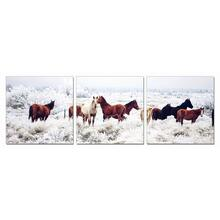 Modrest Mustangs 3-Panel Photo On Canvas