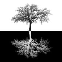 Inverse Tree (small and Framed)