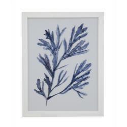 Seaweed Under Water I