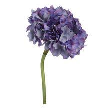 Hydrangea,Lavender