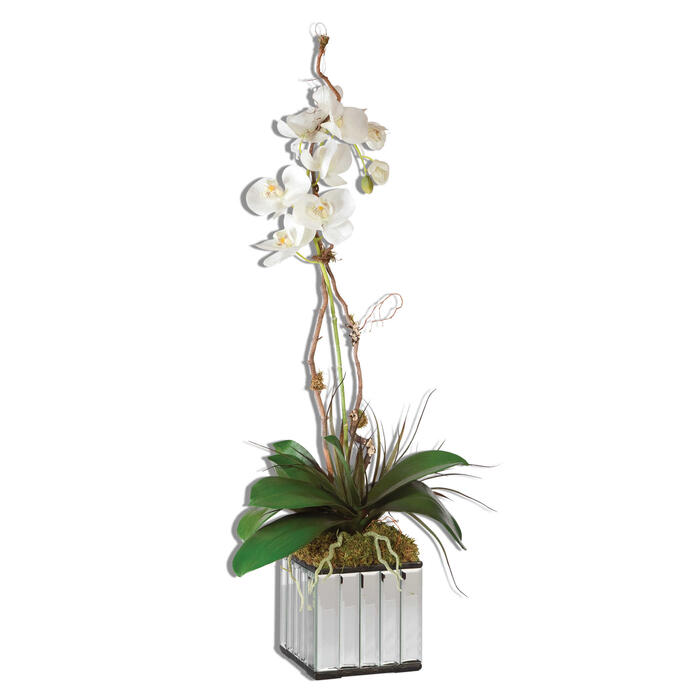 Uttermost - Kaleama Orchids, White