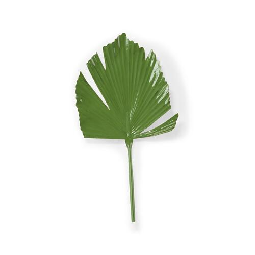 Split Leaf Plam (left)