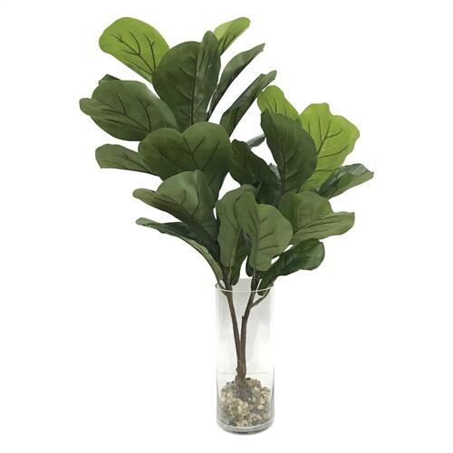 Urbana Fiddle Leaf Fig
