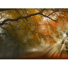 Fall Rays (small) (framed)