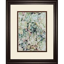 Translucent Succulents By Chelsea Kedron