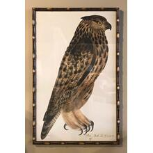 See Details - Owl Picture