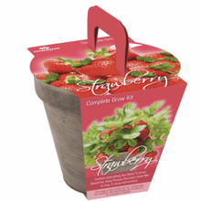 TOTAL GREEN Strawberry Grow Kit