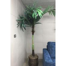 Tree, 8' Coconut Palm