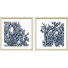 Blue Coral I S/2