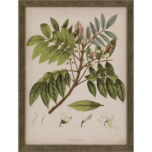 Plants I S/3
