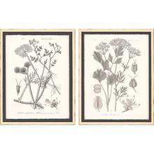 Grey Botanicals I S/2
