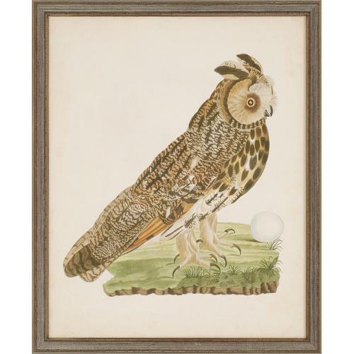 Nozeman Owls S/4