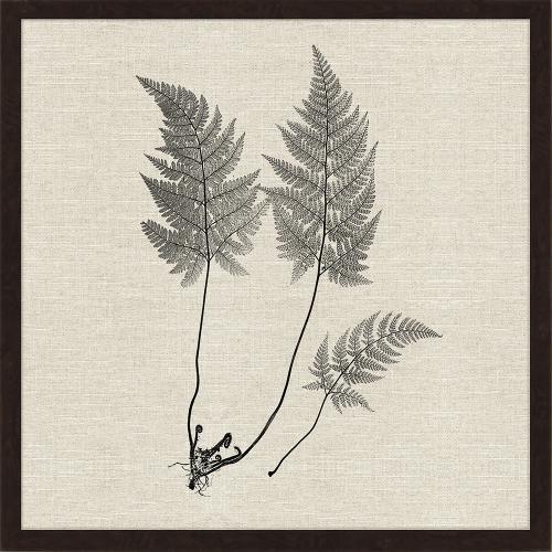 Modern Ferns I S/2
