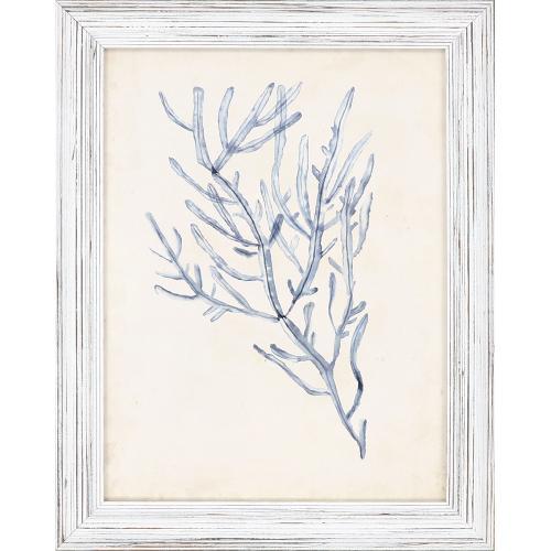 Seaweed Specimens S/4