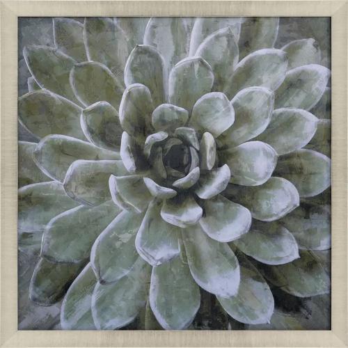 Product Image - Succulent Verde II
