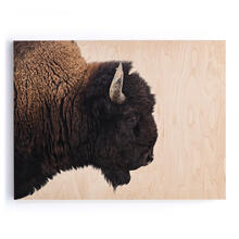 "American Bison-maple Box 60""x40"""