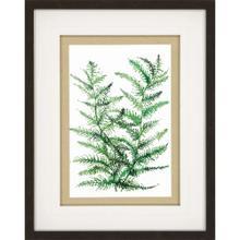 Product Image - Wild Greens II