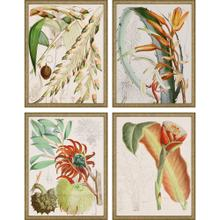 Tropical Variety S/4