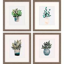 Houseplants S/4