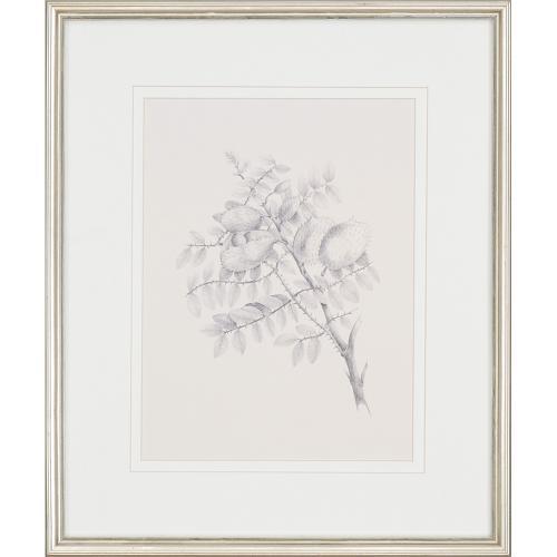 Foliage S/4