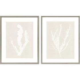 Seaweed S/2