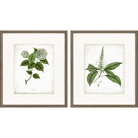 Sage Botanicals I S/2