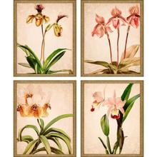Product Image - Orchids S/4