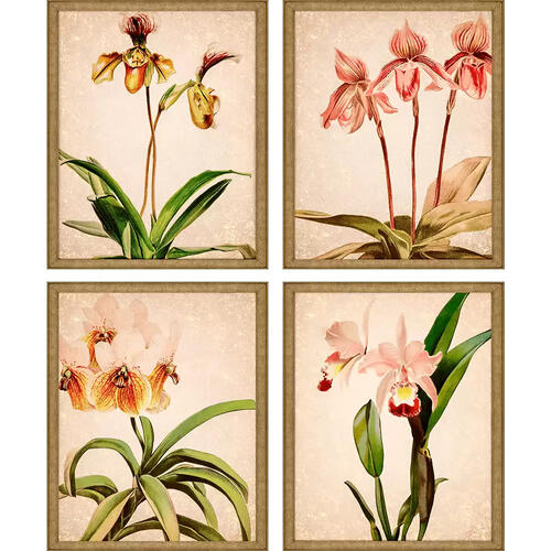 Orchids S/4
