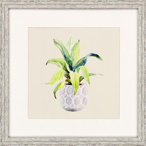 Plants S/4