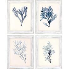 Product Image - Seaweed Specimens S/4