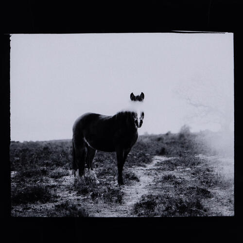 Blank Horse By Annie Spratt