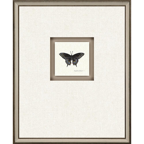 Butterfly Study I S/4