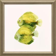 Product Image - Discus Fish II