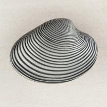 See Details - CLAM SHELL