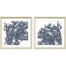 Blue Coral II S/2