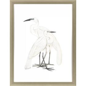 Black Billed Heron