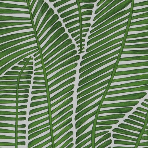 Pteris Scando By Marianne Hendricks
