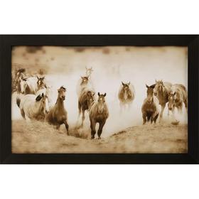 San Cristobol Horses