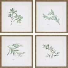 Product Image - Herbs S/4