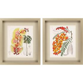 Delicate Tropicals II S/2