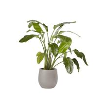 Rosen Planter