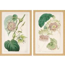 Antique Flowers S/2