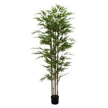 "PE POTTED BAMBOO TREE 38""W, 77""H"