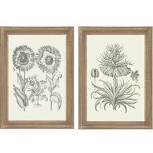 Sepia Botanical I S/2