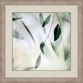 Soft Eucalyptus II