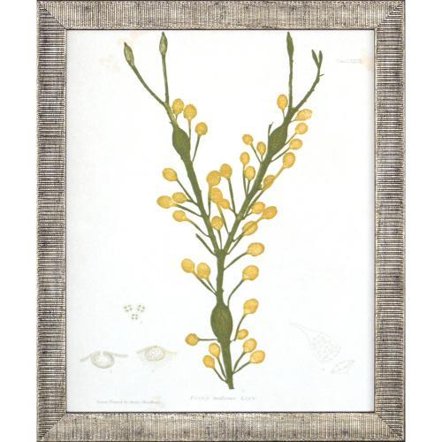Seaweed II S/4