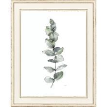 Product Image - Eucalyptus II