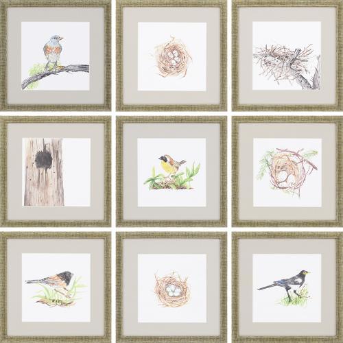 Birds S/9